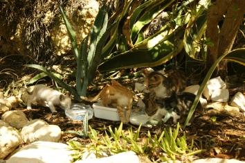 Kitten an der Algarve