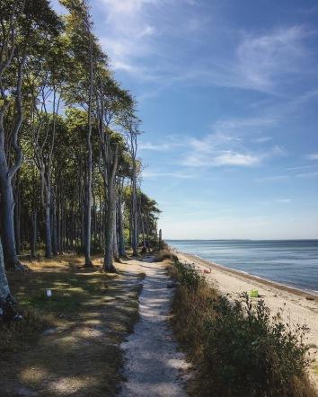 Gespensterwald und Küste